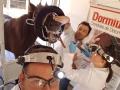 Odontologia_Equina_(4)