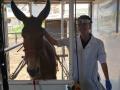 Odontologia_Equina_(18)